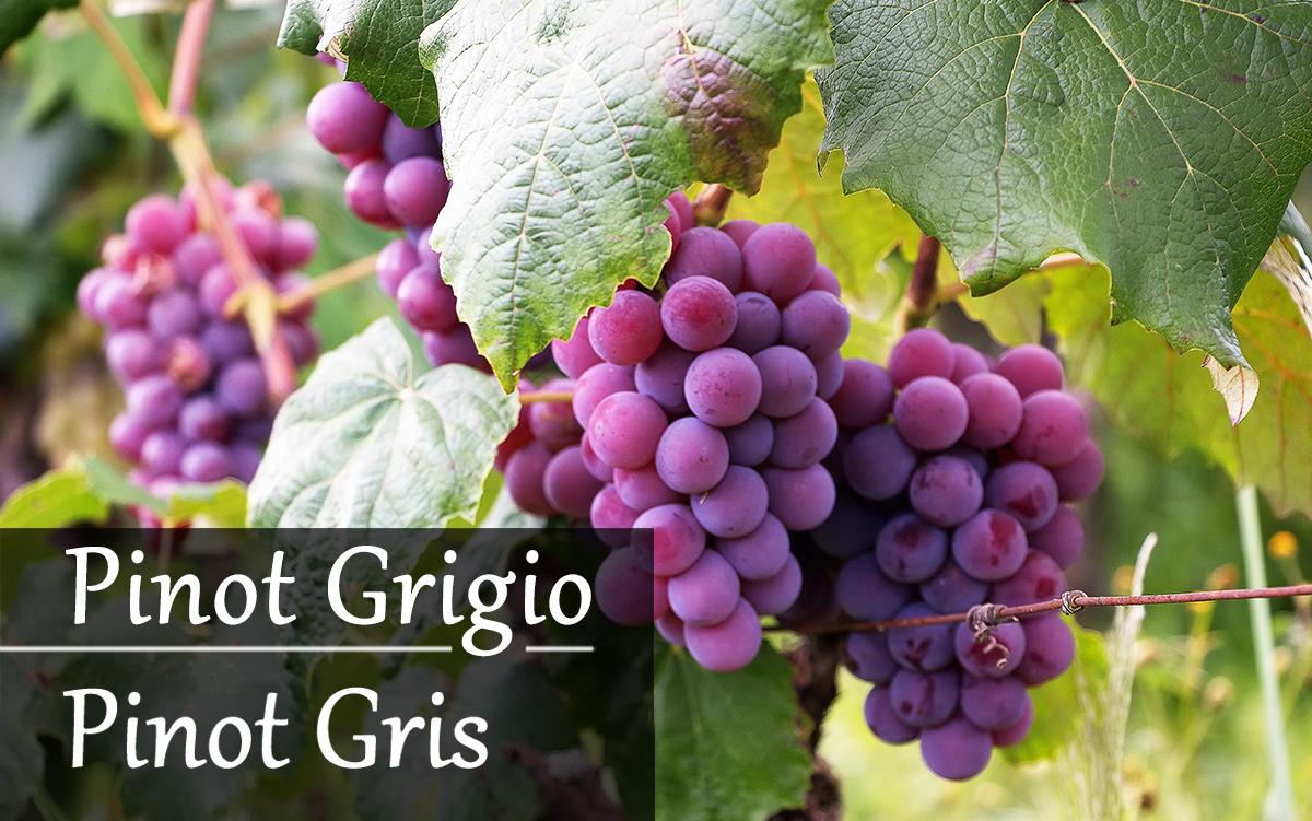 Pinot-Gris&Pinot-Grigio2