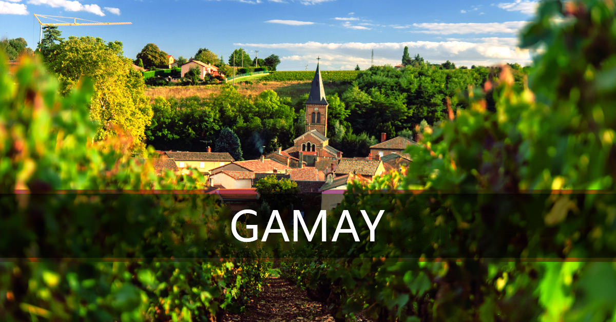 Gamay-2
